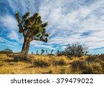 Landscape At The Joshua Tree...