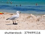 Silver Sea Gull On The Sand...