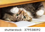 Cute Red Cat Lying In The...