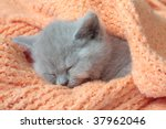 Stock photo kitten 37962046
