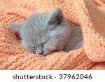 Stock photo kitten 37962046