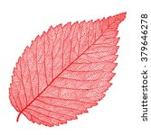 Vector Skeletonized Leaf On A...