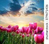 Beautiful Landscape With Tulip...