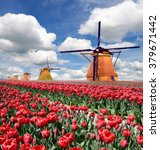 a magical landscape of tulips... | Shutterstock . vector #379671442