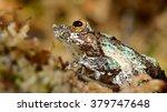 frog in terrarium | Shutterstock . vector #379747648