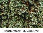 Nature Background. Lichen On...