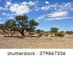 Namibian Landscape. A Gemsbok ...