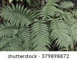 lush fern plant | Shutterstock . vector #379898872