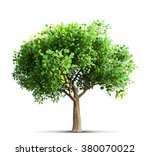 maple tree isolated 3d rendering | Shutterstock . vector #380070022