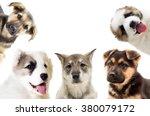 Stock photo set of puppies looks 380079172