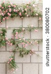 Pink Roses On The Wall  In...
