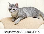 beautiful portrait of grey cat  ... | Shutterstock . vector #380081416