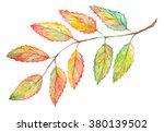 Watercolor Rowan Ashberry Leaf...