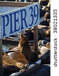 This Is Pier 39 And The Sea...