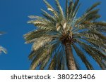 palm tree leaves on the blue... | Shutterstock . vector #380223406