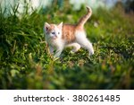 Stock photo ginger small kitten playing in the street 380261485