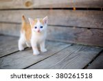 Stock photo ginger small kitten playing in the street 380261518