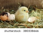 Cute Yellow Chicken And Egg...