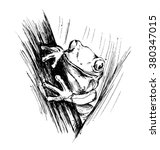 hand sketch frogs | Shutterstock .eps vector #380347015