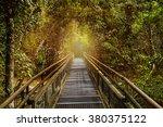 Jungle Rainforest Tropic Fores...