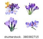 Set Violet Yellow Flowers Crocus - Fine Art prints