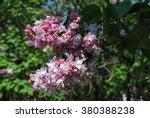image of spring lilac violet... | Shutterstock . vector #380388238