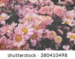 Stock photo pink flower 380410498