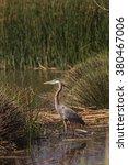 great blue heron bird  ardea... | Shutterstock . vector #380467006
