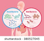 good bacteria and bad bacteria  ... | Shutterstock .eps vector #380527045