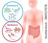 good bacteria and bad bacteria  ... | Shutterstock .eps vector #380527078