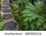 Garden Path Way With Under Tre...