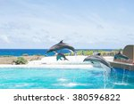 Dolphins Show On Hawaii Island...