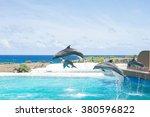 Dolphins Show On Hawaii Island...