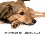 Cute mixed breed dog portrait at studio - stock photo