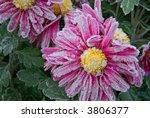 ice crystals in early morning... | Shutterstock . vector #3806377