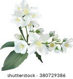 illustration with jasmine... | Shutterstock .eps vector #380729386