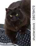 Stock photo intelligent black cat and computer isolated 38078473
