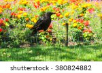 Black Crow Against Colorful...
