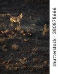 a zebra in the deserted palmwag ...   Shutterstock . vector #380878666