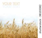 wheat   Shutterstock . vector #38103382