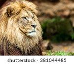 lion portrait  | Shutterstock . vector #381044485
