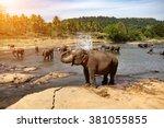 Elephants Bathing In The River...