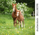 Small photo of Beautiful mare with its foal running together on pasturage
