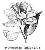 Camellia  Vintage Engraved...