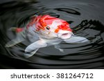 Japan Koi Carp In Koi Pond
