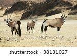 Oryx In Namibian Desert