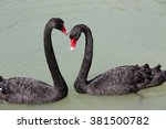 two black swans creating a... | Shutterstock . vector #381500782