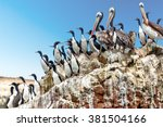 Brown Pelicans And Guanay...