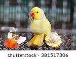 yellow indian ringneck parakeet ... | Shutterstock . vector #381517306