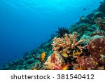 coral reef with soft and hard... | Shutterstock . vector #381540412